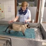 Tierklinik4